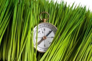 A Compass in the grass